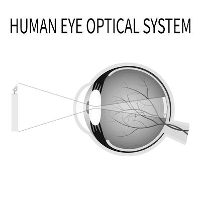 Normal Eye B&W Diagram